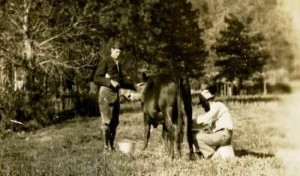 DH_Lawrence_Ranch_Taos_New_Mexico_Lawrence_milking_Susan_the_cow-300x176